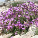 красивые цветы в Черногории
